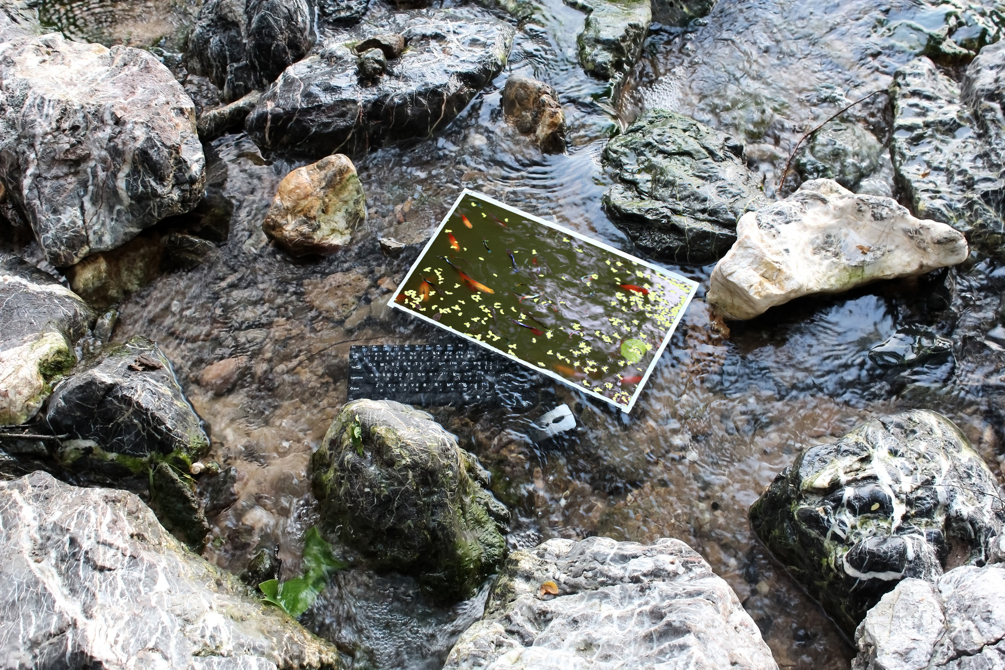 The computer screen with fish under the surface of the water in a waterfall.